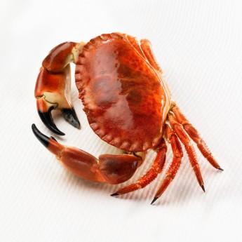 Bou de mar cuit