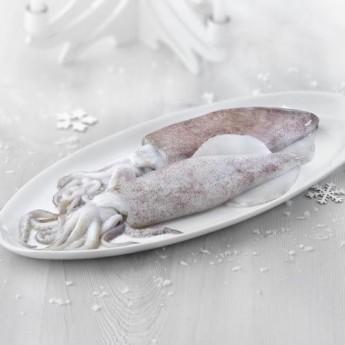 Calamar europeo