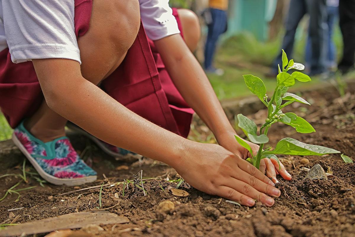 ¡Sembrar semillas fomenta la curiosidad y el entusiasmo de los niños!