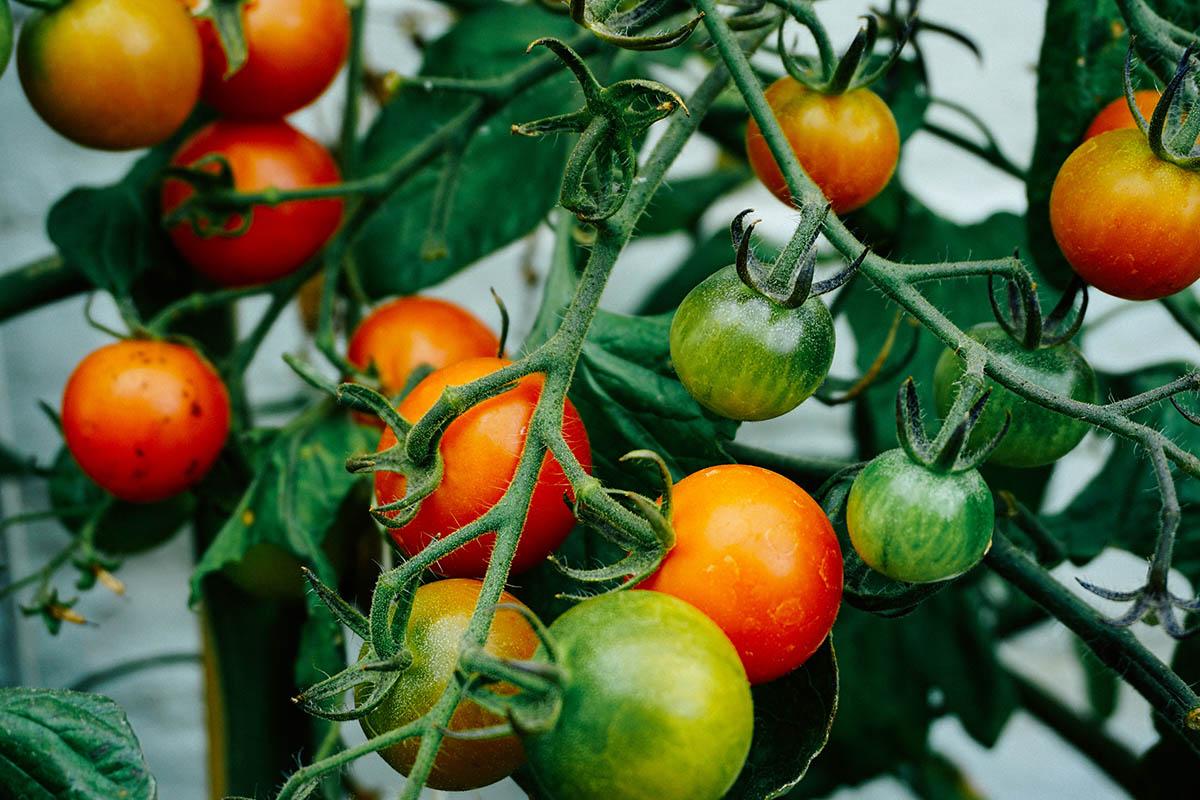 Este movimiento engloba agricultores, productores, comerciantes, gastrónomos y restauradores.