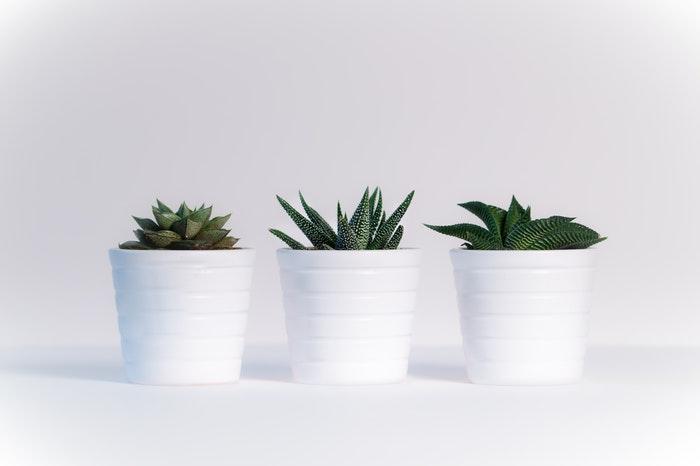 Aporta color y vida a tu casa con plantas y flores.