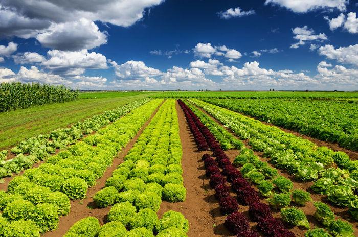 ¡Descubre dónde se producen las mejores verduras!